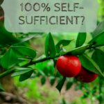 Can you be 100% self-sufficient?