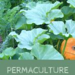 From Urban Permaculture to Regreening the Desert