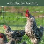 Chickens on rotating pastures with electric netting etc