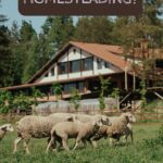 What is homesteading