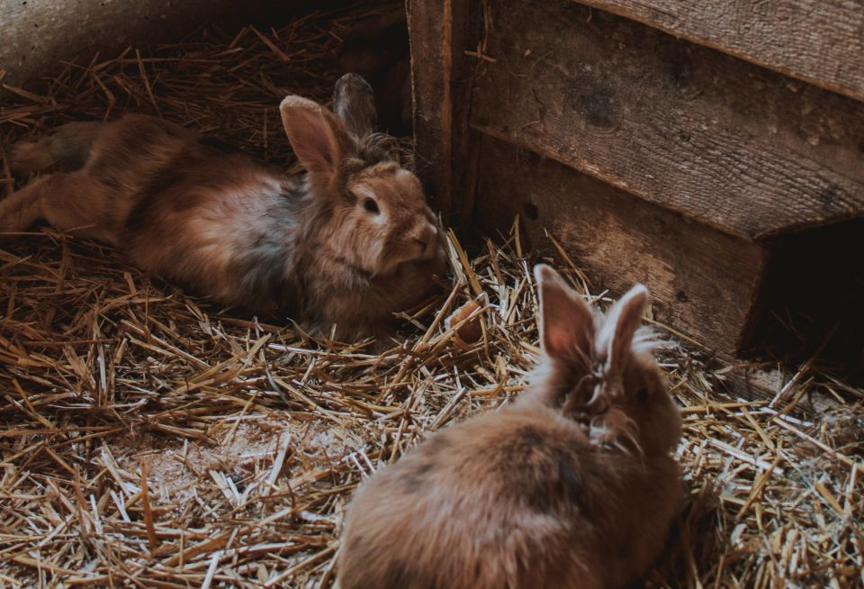 Rabbits for meat & self-sufficiendy